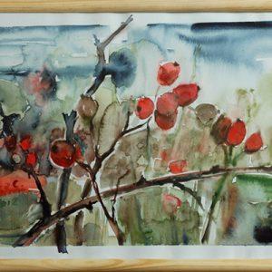 """akwarela """"Owoce dzikiej róży""""autor: Elka Ciępka"""